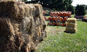 Farmer's Market Stock Photos