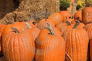 Pumpkins Free Stock Image
