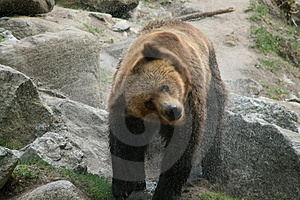 Bear Bath Stock Photos - Image: 2401563