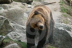 Bear Bath Stock Photos - Image: 2401563