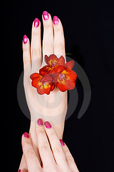 Hands And A Flower On Black Stock Image - Image: 24025101