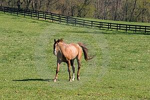 Horse Farm Royalty Free Stock Image - Image: 24081806