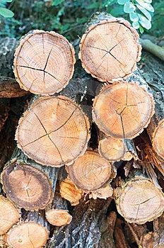Trunks Stock Image - Image: 24098461