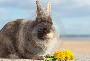 Bunny Royalty Free Stock Photos - Image: 24112848