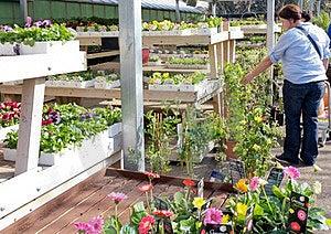 Lady Customer In Garden Centre Stock Photos - Image: 24123823
