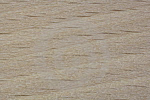 Beech Pattern Royalty Free Stock Images - Image: 24140129