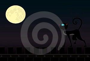 Cat On Fence Stock Image - Image: 24152711