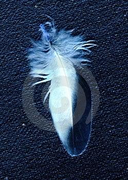 Feathery Stock Photography - Image: 24156392