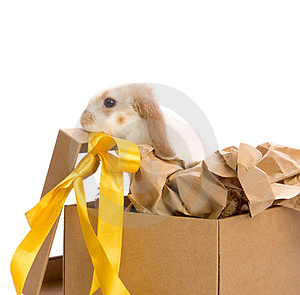 Bunny In A Gift Box With A Yellow Ribbon Stock Image - Image: 24179841
