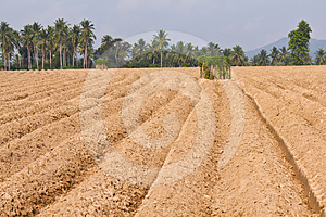 Rutted Soil Cultivation For Cassava Stock Photos - Image: 24207893