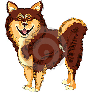 Vector Dog  Lapphund Breed Smiles Royalty Free Stock Photography - Image: 24215617