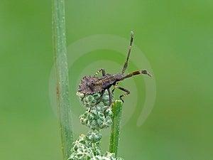 Dock Bug. Royalty Free Stock Photography - Image: 24231757