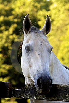 White Face Royalty Free Stock Photo - Image: 24233145