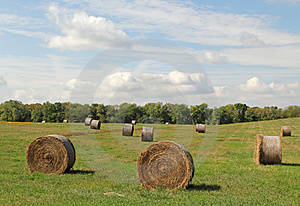 Hay Bales Stock Images - Image: 24259274