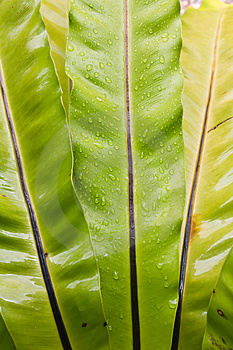 Green Leaf With Dew Royalty Free Stock Images - Image: 24261569