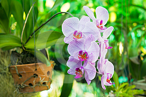 Purple Orchid Flower, Beautiful Royalty Free Stock Image - Image: 24281206