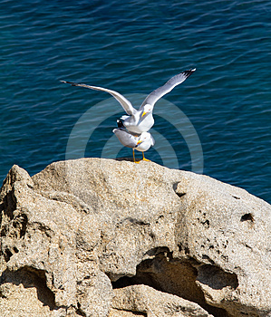 Seagulls Royalty Free Stock Images - Image: 24298999