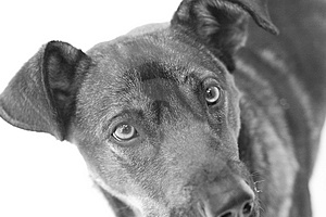 Dog With Sad Look Stock Photography - Image: 2430382