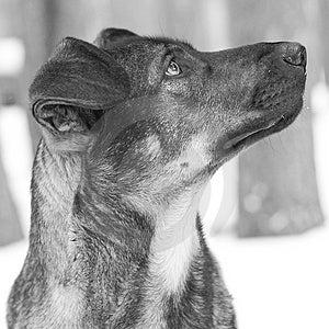 Dog With Sad Look Stock Photos - Image: 2430383