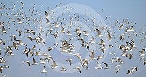 Seagulls Stock Photos - Image: 24332653