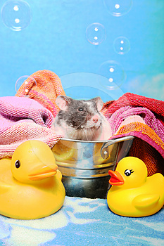 Mouse In A Bath Tub Stock Image - Image: 24353271