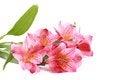 Romantic flower design Stock Photography