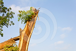 Branches Of The Tree Splits. Stock Images - Image: 24396984