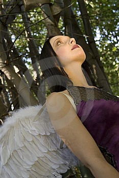 Evil Fairy Looking Up Stock Images - Image: 2440054