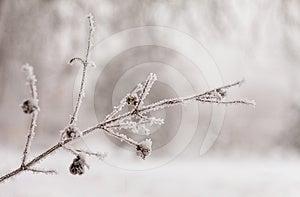 Frozen Tree Brunch Royalty Free Stock Photo - Image: 24417105
