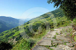 Himalayan Forest Landscape, Trek To Annapurna Stock Photos - Image: 24431983