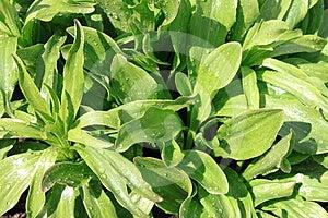 Green Wet Grass Stock Photo - Image: 24444530