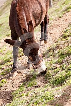 Catalan Donkey Stock Photo - Image: 24445190