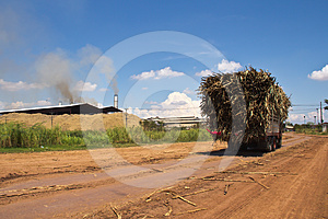 Cane Trucks To Sugar Factory Stock Photography - Image: 24459802