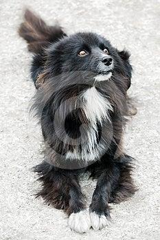 Homeless Stray Street Dog Royalty Free Stock Photography - Image: 24468507