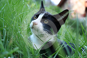 Cat On The Grass. Stock Images - Image: 24491944