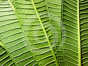 Green Leaves Royalty Free Stock Image - Image: 24498386