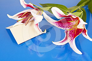 Flowers With Blank Card Stock Image - Image: 24536071