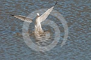 Seagull Stock Photo - Image: 24537190