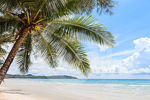 Coconut Tree On The Beach Stock Photography - Image: 24560952