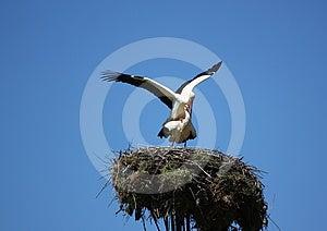 Storks Royalty Free Stock Photography - Image: 24575397