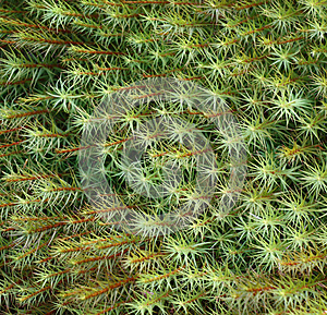 Background From A Moss Royalty Free Stock Photo - Image: 24596605