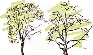 Tree Silhouette - Detailed Vector Stock Photo - Image: 24606990
