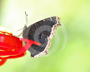 Butterfly Stock Photo - Image: 24610300