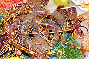 Lobster At The Market Royalty Free Stock Photos - Image: 24635398