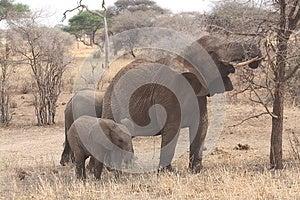 Elephant Family Stock Image - Image: 24638181