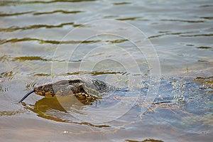 Closeup Of Lizard - Varanus Royalty Free Stock Image - Image: 24650776