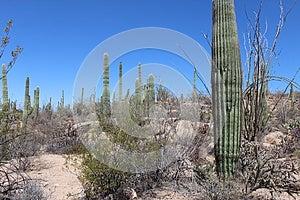 Saguaro National Park West Stock Image - Image: 24653021