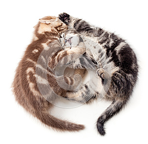 Two Kittens Struggle Top View Stock Images - Image: 24660614