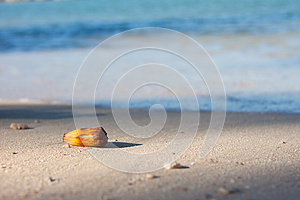 Tropical Nut On Beach Royalty Free Stock Photography - Image: 24690377