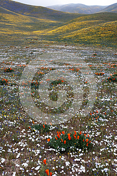 Wild Flowers And Hills Stock Photography - Image: 24691802